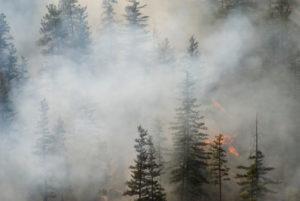 Fire Protection & Wildfire Mitigation - Grand County, CO